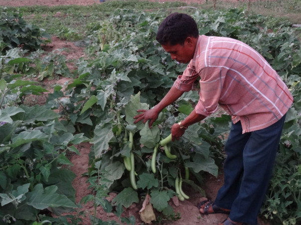 I am fundraising to help Rami Setty, a tribal organic farmer in his effort to end malnutrition in Bhadrachalam tribal area