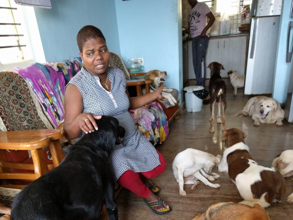 Supporting the welfare of 47 rescued dogs