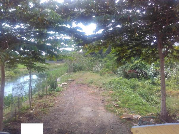 Planting Trees in Semi Urban Area