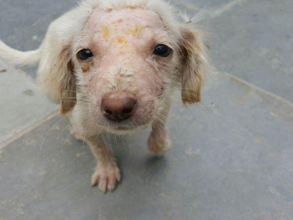 Help PFA save more animals!