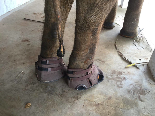 Help Rescued Elephant Lakshmi Reach Her Forever Home