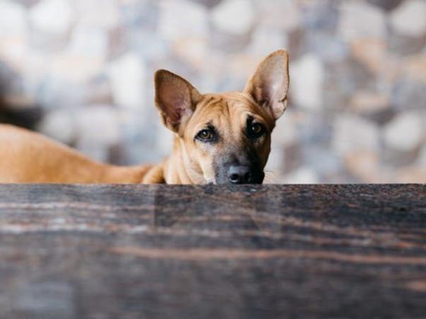 Unite for Setting up Animal Welfare Hospital