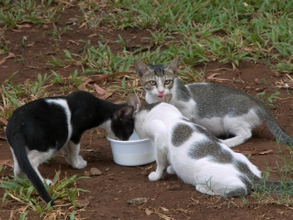 Help build Animal shelter and volunteer community for Animals in need