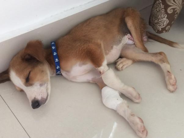 Puppy Glitter Needs Your Help