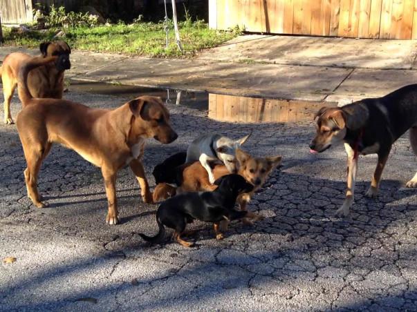 Help Feed The Street Dogs Around Bangalore