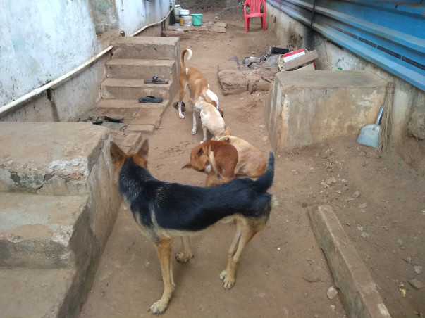 Help Us to Build a Permanent Shelter for the needy animals