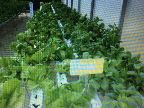 Help Start Urban Farming or Any Where Farming