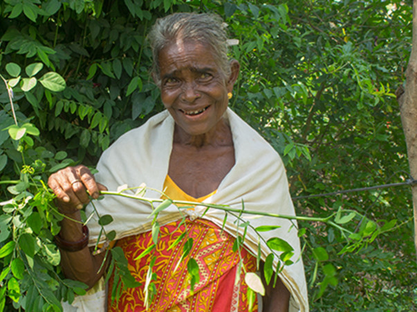 Lets create a livelihood for our Adivasis