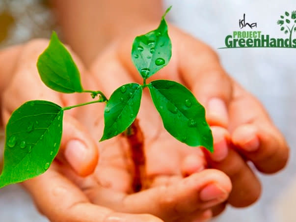 Plant trees online with Project Green Hands!