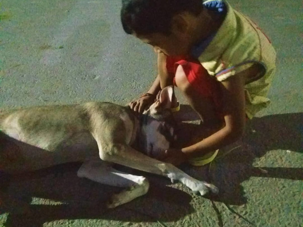Help For Dogs on Street in Lucknow