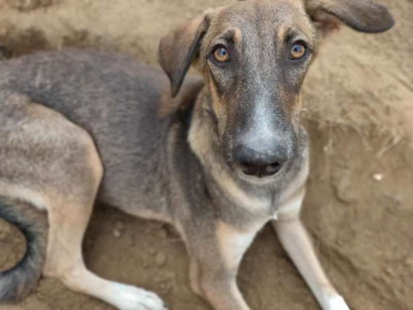 Help Boozo Find His Forever Home