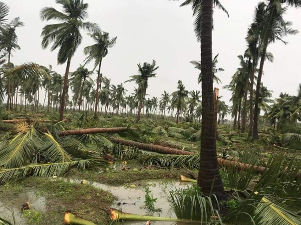"""Help My Home to Recover from the Effect of Cyclone 'Gaja' """"Save Delta"""""""