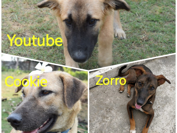 Help 3 survivor Dogs To Travel To Their Forever Home