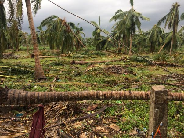 Help TamilNadu Farmers Recover from Cyclone