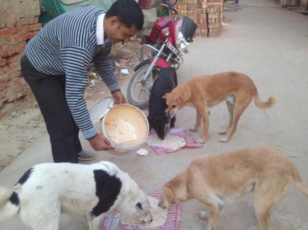 Do support 300+ dogs' medical needs & care by donating to us