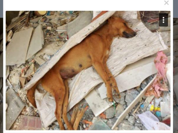 Help the Voiceless Animals