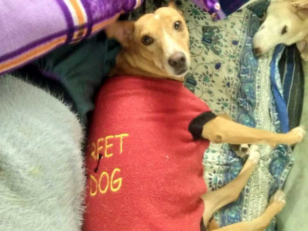 Barbie The Doll looks for Her Forever Home.