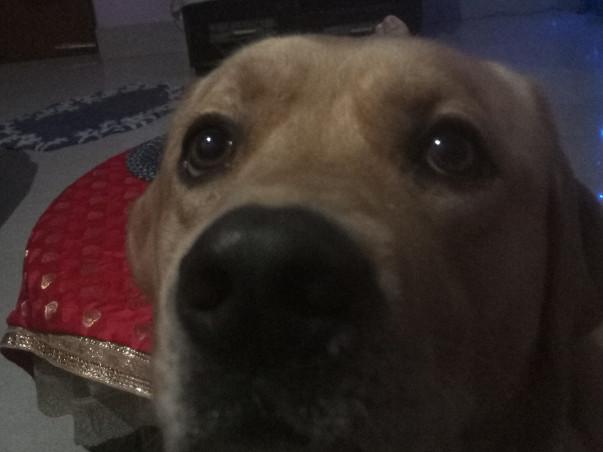 Help My Baxter Fight Cancer