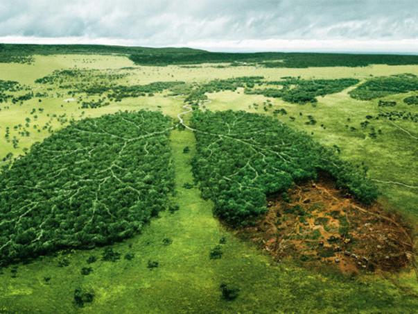 Let's create the Hennagara Urban forest