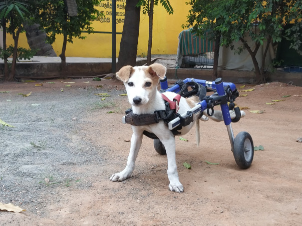 Help Us Care For Our Paralysed Dogs!