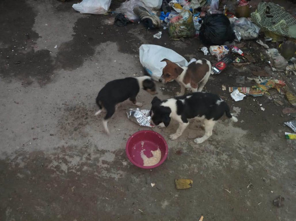 Help Me Neuter And Treat 25+ Stray Dogs And Cats