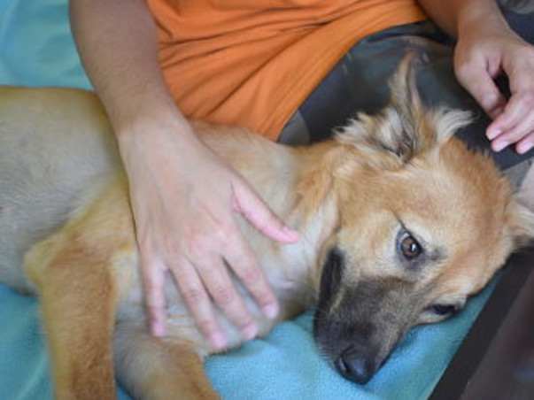 Help Gloxy  (an Indian Dog) Reach Her Home in Vancouver, Canada