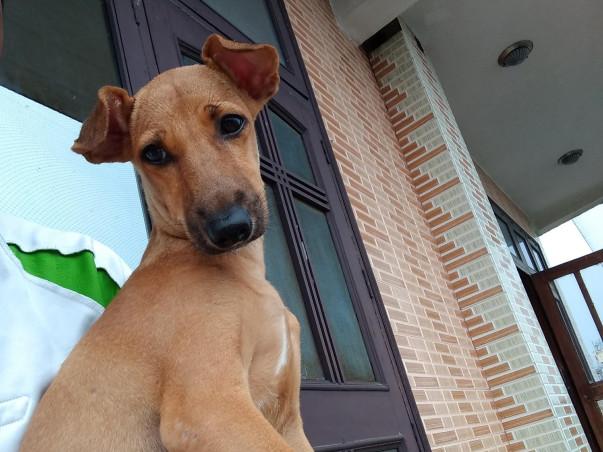 Help Roadie Find A New Home!