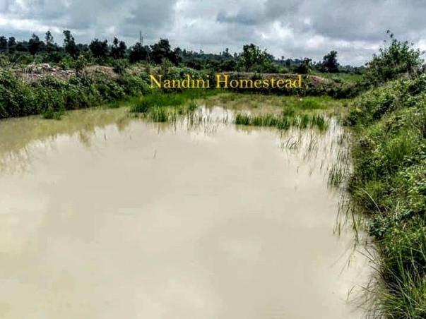 Nandini Homestead