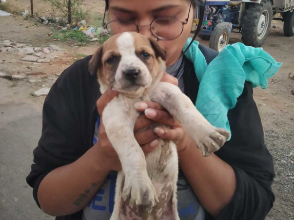 Help Us To Alleviate 90+ Stray Dogs' Suffering!