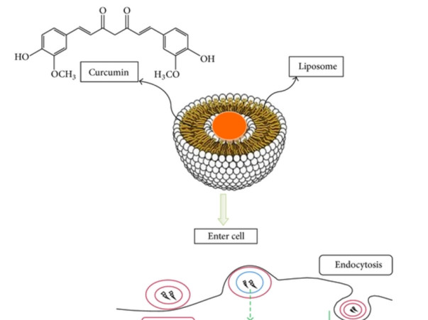 Development Of Anticancer Agents As A Project