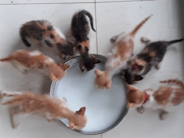 Help The Stray Babies Get Home