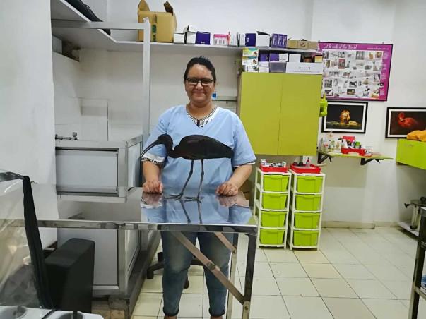 Wildlife Rescue And Rehabilitation