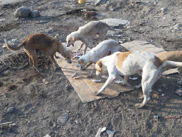 Animals are dying at Navi Mumbai Airport Site! Help us feed them!