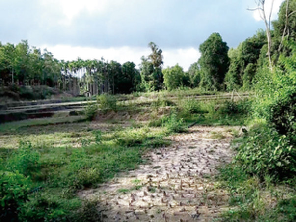 River Rejuvenation - Dyavasa Punarujjivana