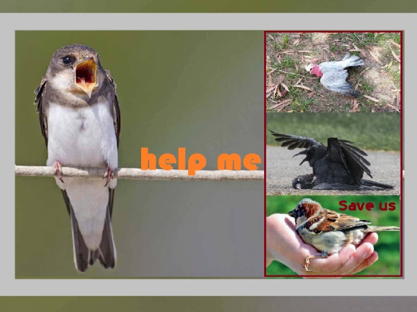 Let's move forward to give good comfort to the birds