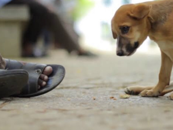 Plz help us!!!  Helping ill street dogs who are suffering !!!