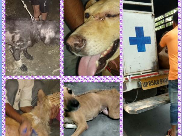 Help Buy Ambulance For Animals