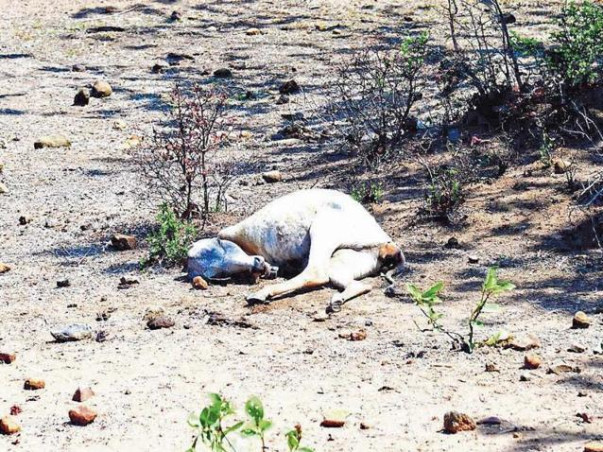 Help The People Of Drought Affected Areas To Rise From Poverty