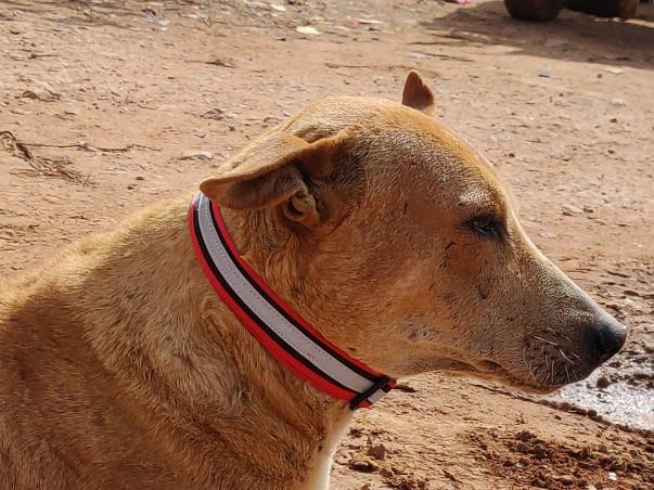Help Varun in saving dogs.