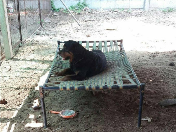 Help Build A Home For Our Animals.
