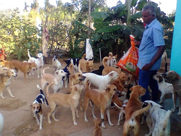 Help Save The Dogs At Aid For Voiceless In Velankanni
