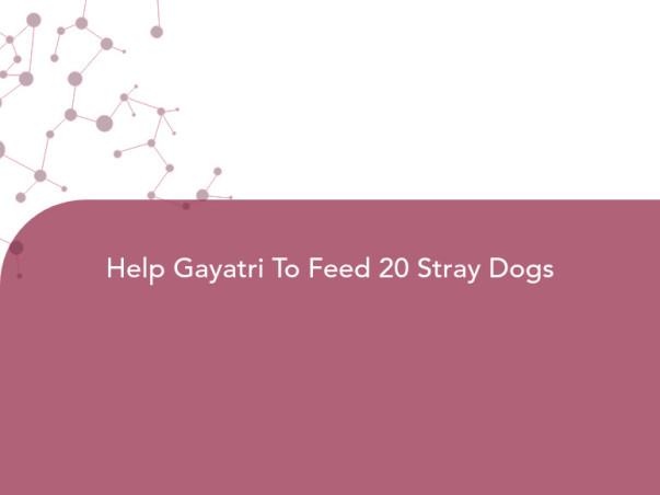 Help Gayatri To Feed 20 Stray Dogs
