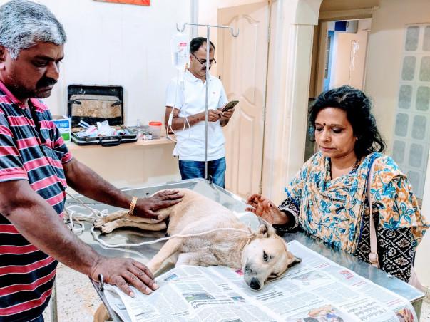 Help Me Save The Needy Animals