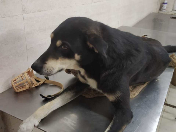 Help Buzo The Dog Fight For His Life