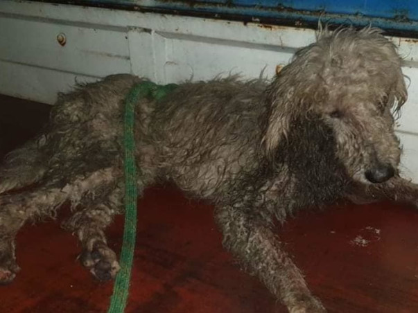 Human failed these Dogs! Abandoned dogs need your help!