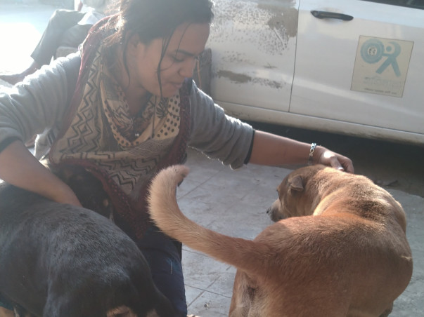 Target to spay/neuter 100 furries in Kolkata.(31 done.69 more to go.)