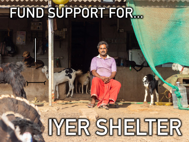 Donate to make a difference to Dr. Iyer's Shelter of 108+ Animals