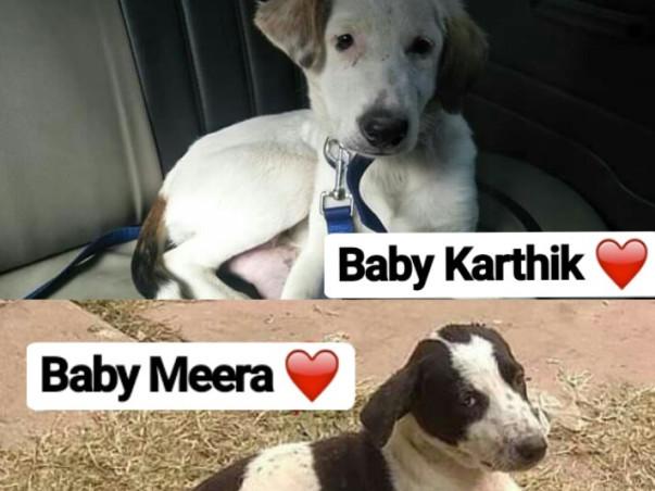 Help Karthik And Meera Reach Toronto