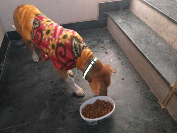 Collaring Strays With Reflective Collars|Save Dogs from Accidents
