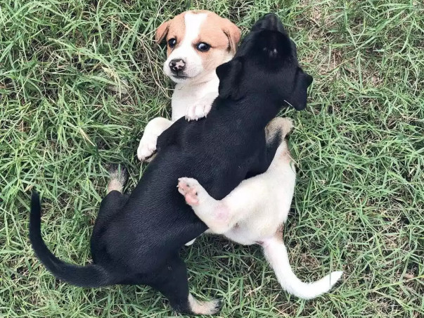 Help Indian Street Dogs